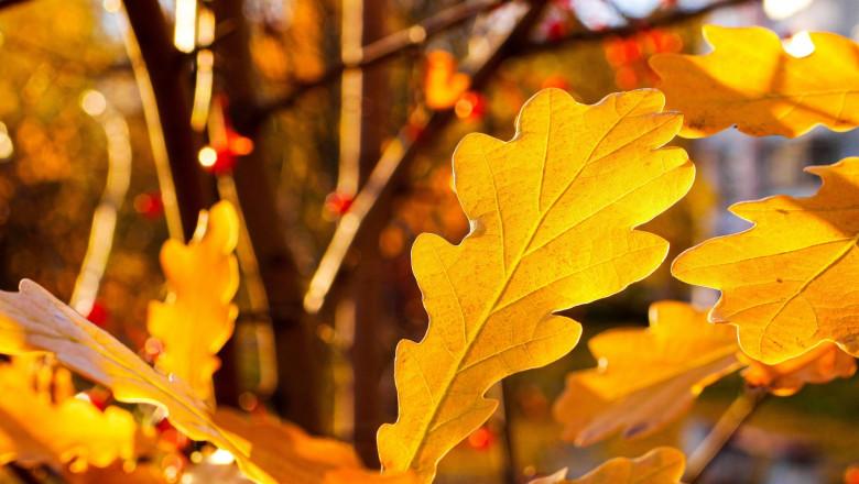 Vremea se încălzește în a doua parte a lunii octombrie. Prognoza meteo ANM pentru următoarele săptămâni, pe regiuni