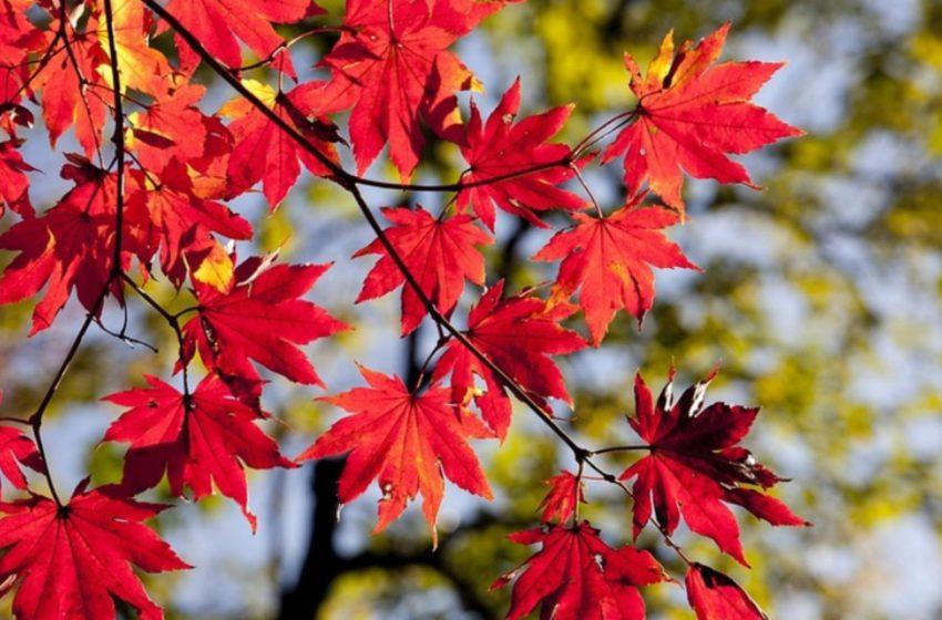 Prognoza 6 octombrie. Vreme rece, în toată țara. Maximele abia urcă la 21 de grade